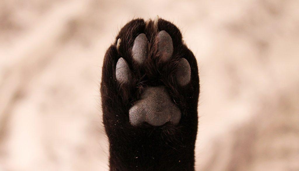 pate de chat
