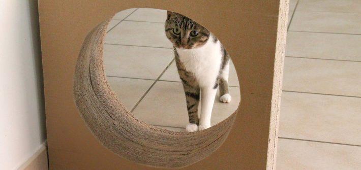 Griffoir à chat en carton